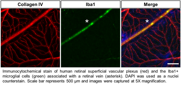 Zen-Bio Human Ocular Cells